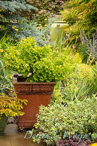 Container & Planters