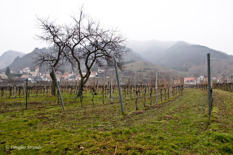Vineyard near Durnstein, Austria