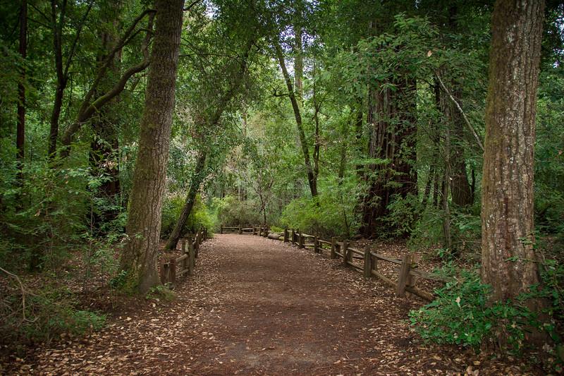 Redwood-72.jpg