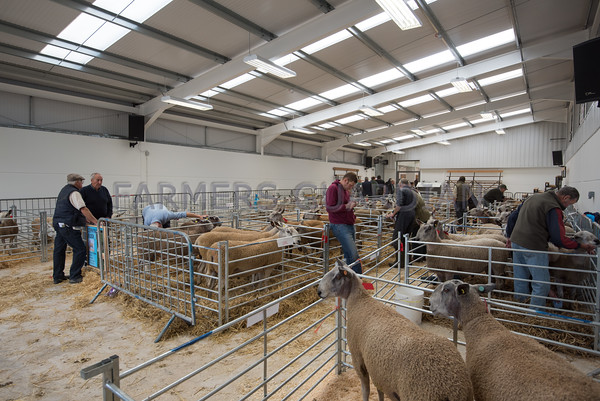 MTH Ruthin Auction Mart Sept 2015