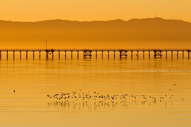 Sunset Bay Birds
