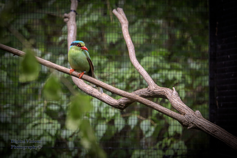 2016-07-17 Fort Wayne Zoo 661LR.jpg