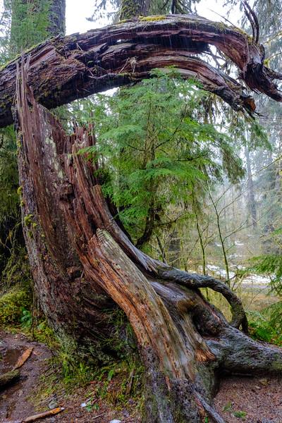 20170311 Hoh Rainforest 002.jpg