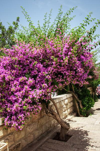Israel_1621.jpg
