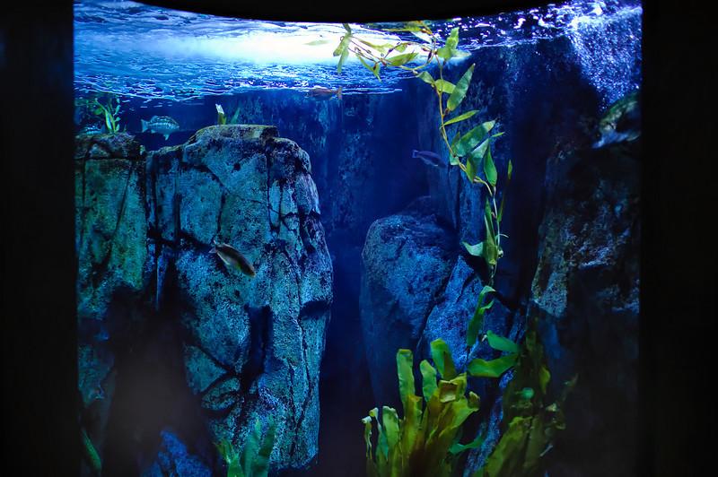 LB-Aquarium-II_21.jpg
