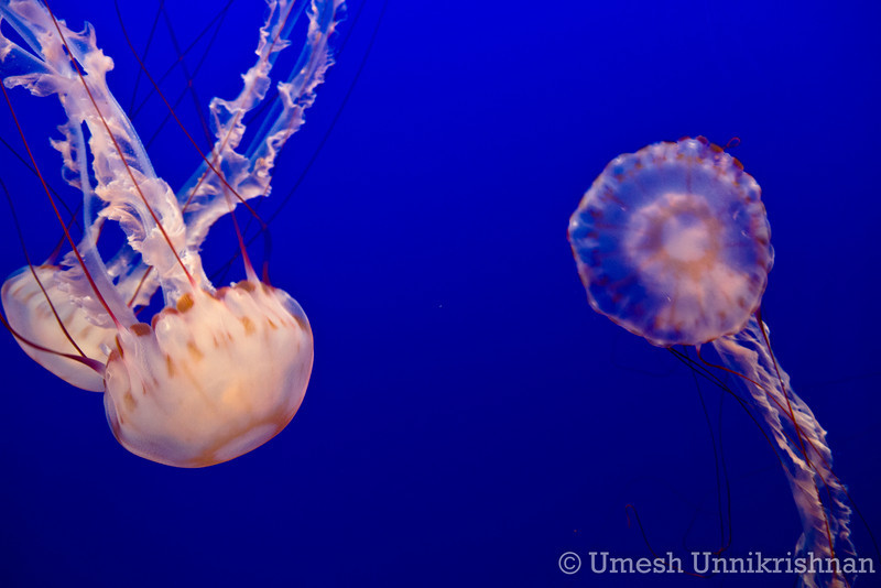 Monterey Bay Aquarium 030.jpg