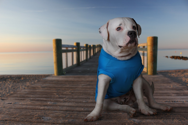 dog-in-blue-shirt2.jpg