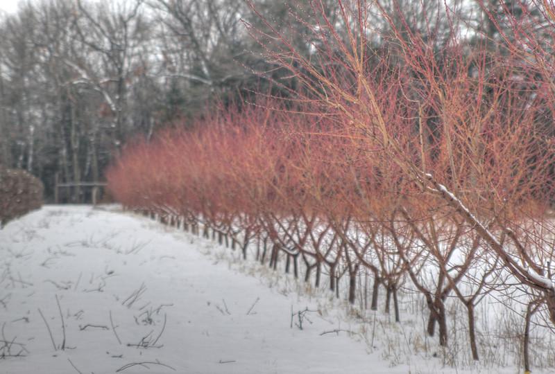 Easy Pickins Winter 023-1676785175-O.jpg