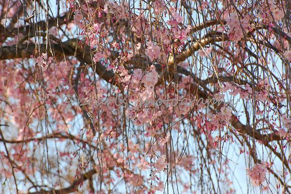 Atlanta Botanical Gardens 3-23-11