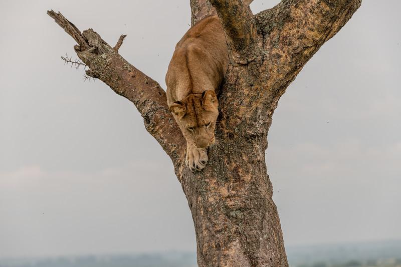 Uganda_T_QE-1269.jpg