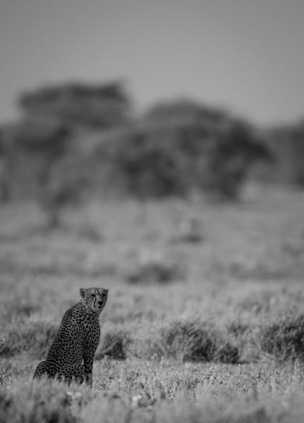Tanzania_Feb_2018-239.jpg