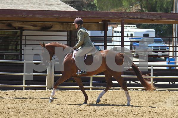HA AA SH Under Saddle - Jr Hrse