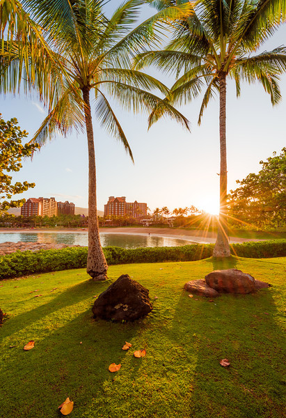 aulani-palm-trees-sunburst.jpg