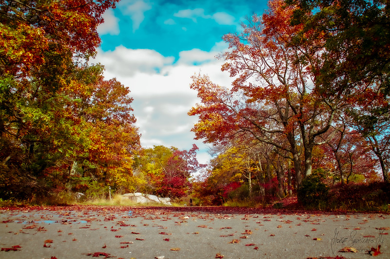 nature-forest-colors-street-new-york-new-jersey-jorge-sarmiento-jr-IMG_7138.jpg