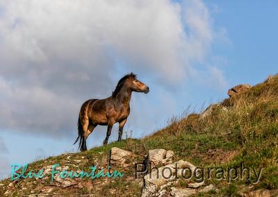 Ponies August