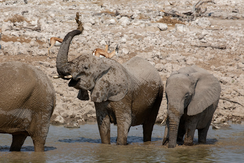 Namibia 69A7865.jpg
