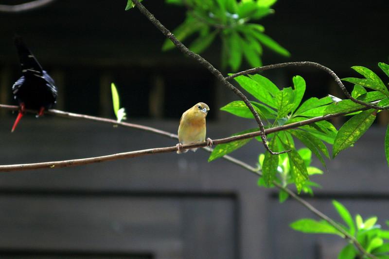 bird_2.jpg