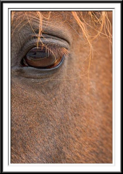 Horse eye (42762860).jpg
