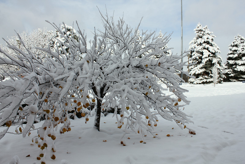 Snowy_Morning_11_10_2012_3300.JPG