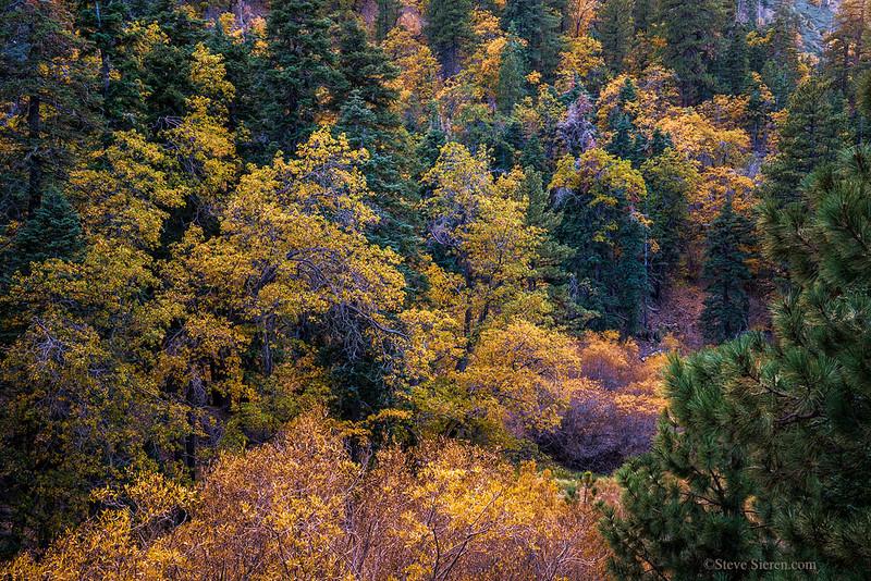 San_Gabriel_Mountains_Fall_Color_DSC3169.jpg