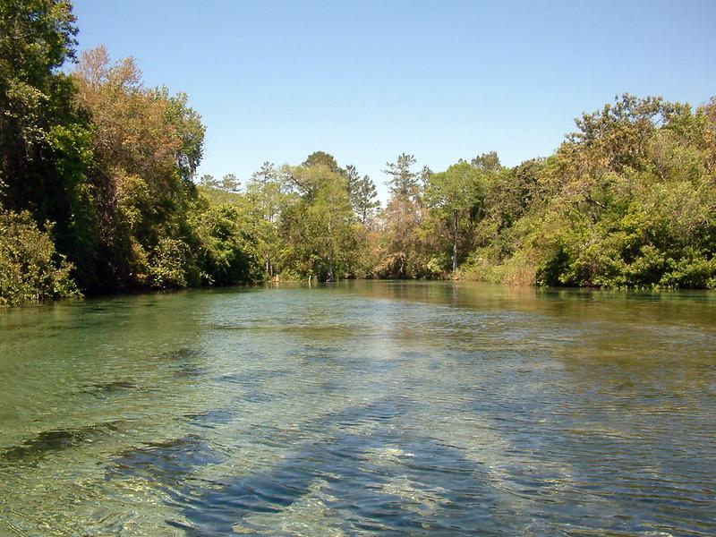 Tarpon Springs FL Wildlife (5).jpg