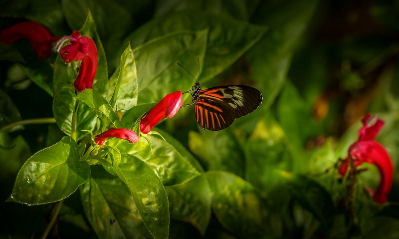 Butterfly-013.jpg