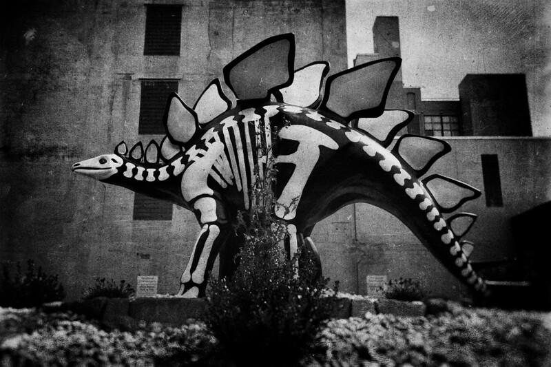 Stegosaurus I