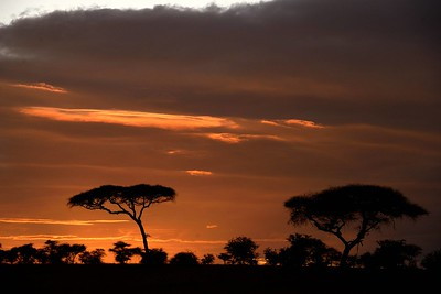 Serengeti and Ngorongoro Landscapes