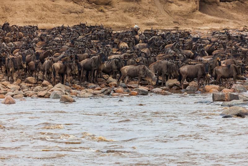 North_Serengeti-41.jpg