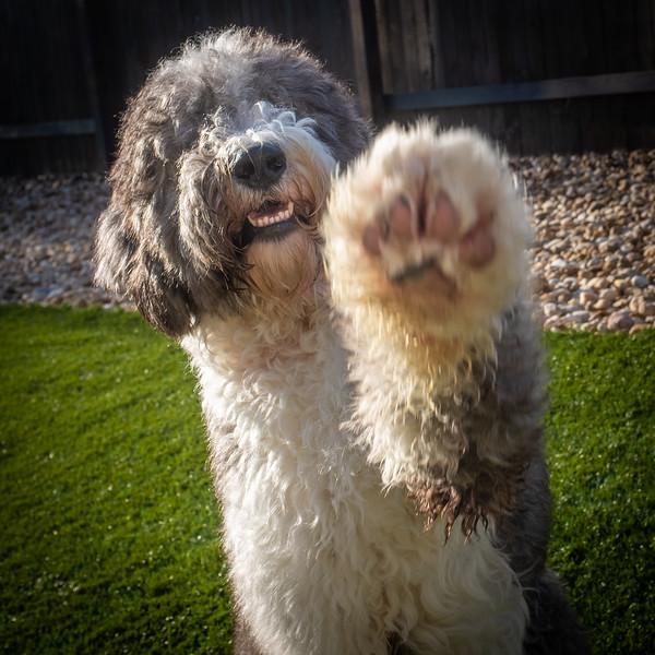 Austin Dogs-14.jpg