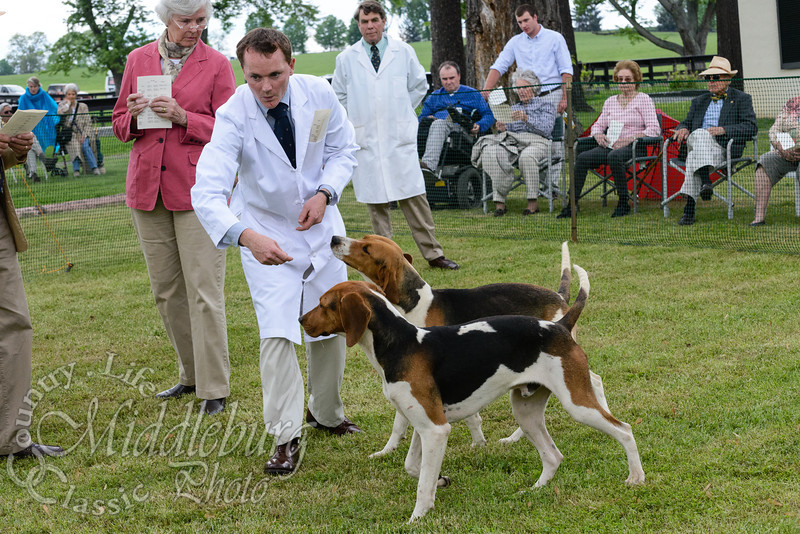 Middleburg Hunt Puppy Show 2013