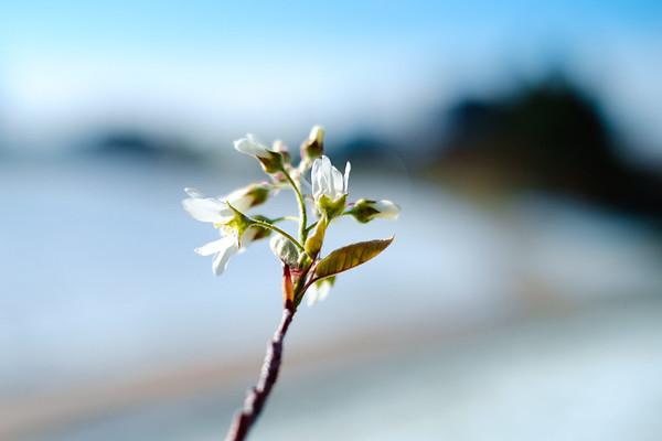 2015.04.17 Spring Snow