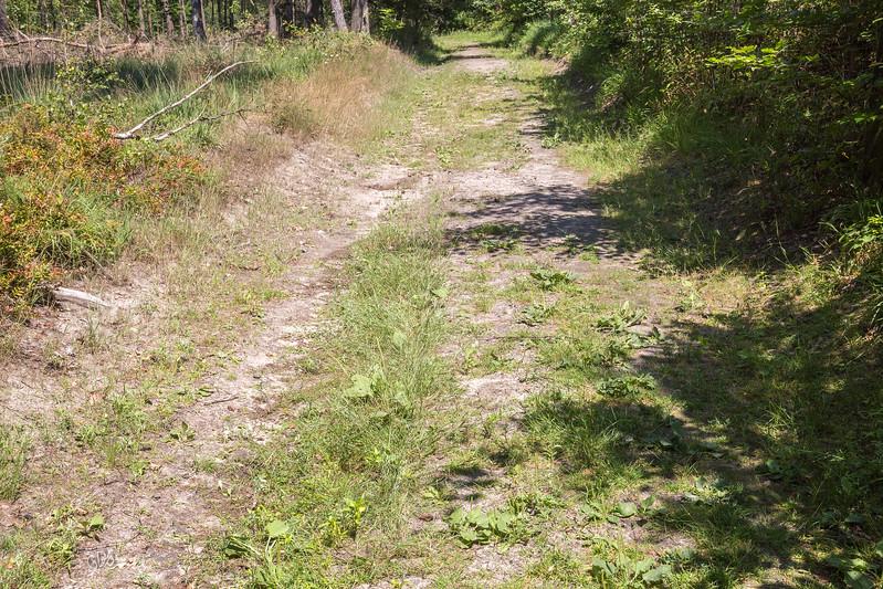 Chemin sablonneux dans le bois de Rixensart