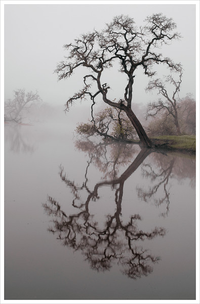 """Leaning Oak - I have this one printed at 30"""" X 40"""". A copy was auctioned off at the Laguna Foundation fund raiser a few years ago. It's a beauty."""