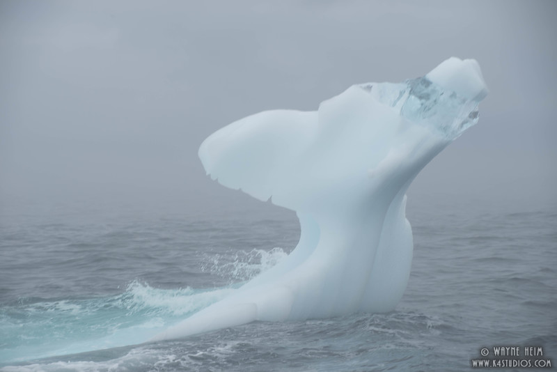 Close  Up Ice Tail   Photography by Wayne Heim