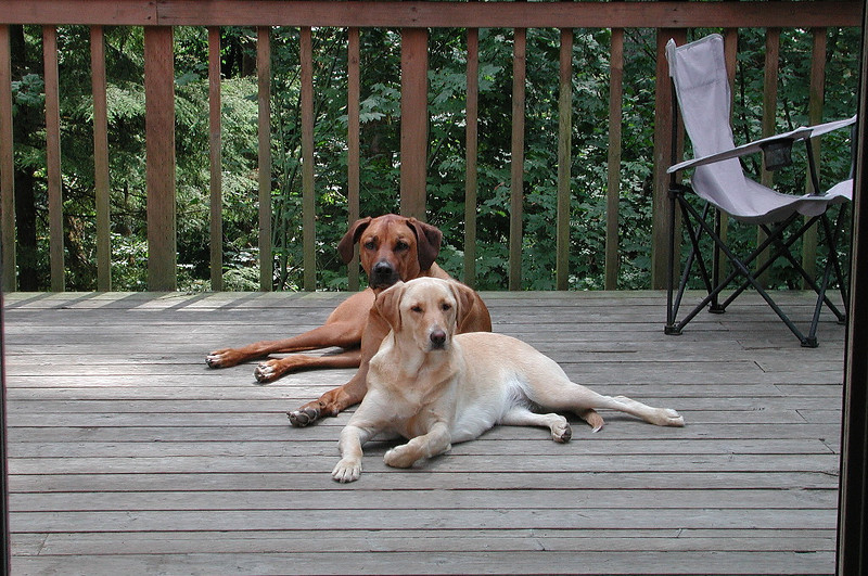 Old Deck with Hakeem and Lacy taking in a mid summer day