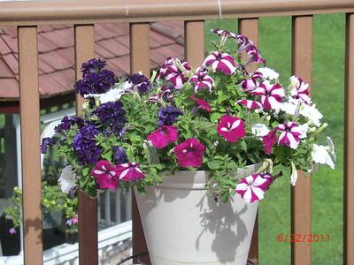 2011 Flowers