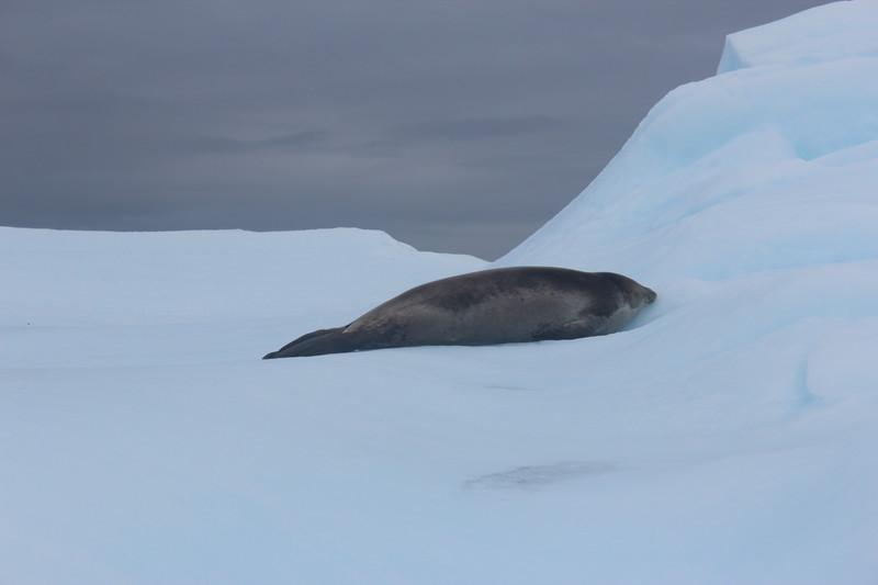 Antarctica 268.JPG