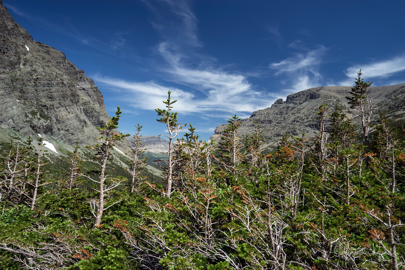 150611_CrackerLake_glacier_national_park_5565.jpg