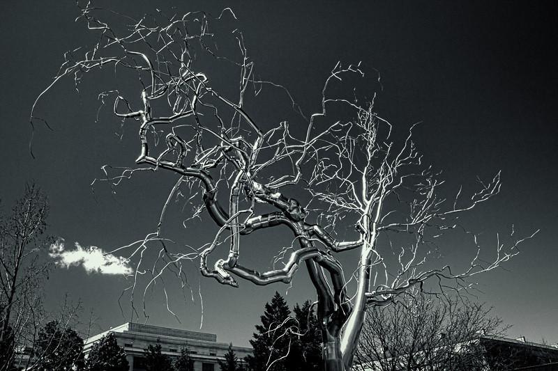 apr 2 - Smithsonian tree.jpg