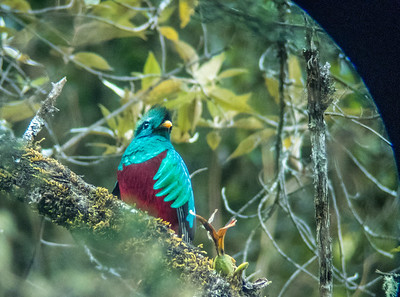 2017 - Costa Rica:  Savegre (San Gerardo) & Rancho Naturalista (Turrialba)