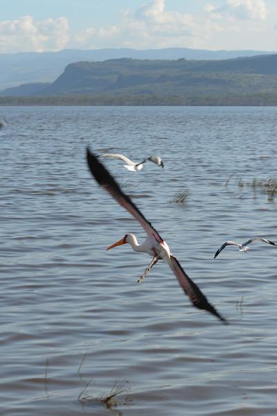 East Africa Safari 116.jpg