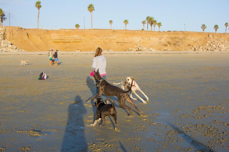 dogs_beach-70.jpg