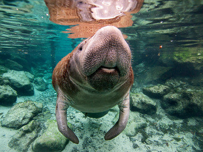 Worldwide underwater