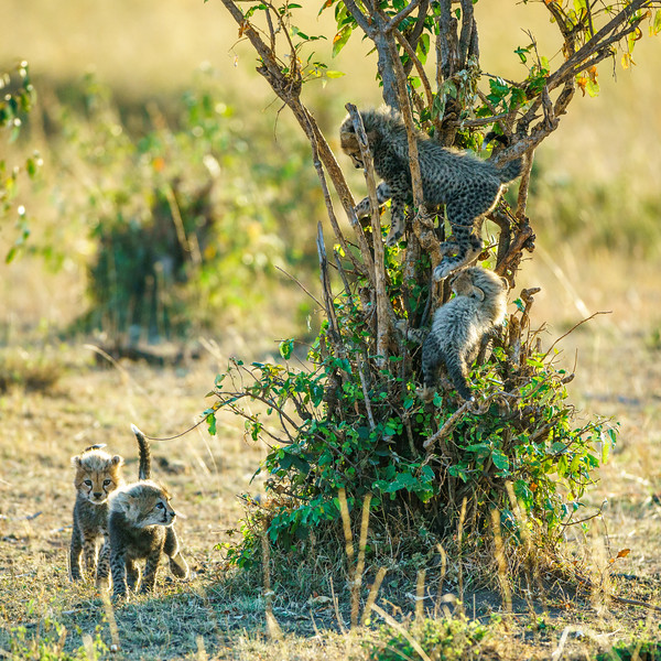 Kenya 2015-06302.jpg