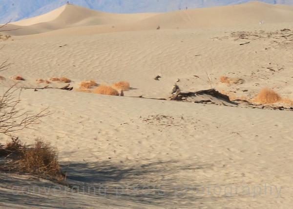 Mesquite Flat Sand Dunes, Death Valley.  2635