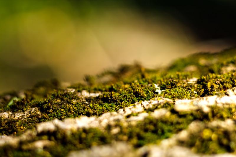 Moss on the Tree 2