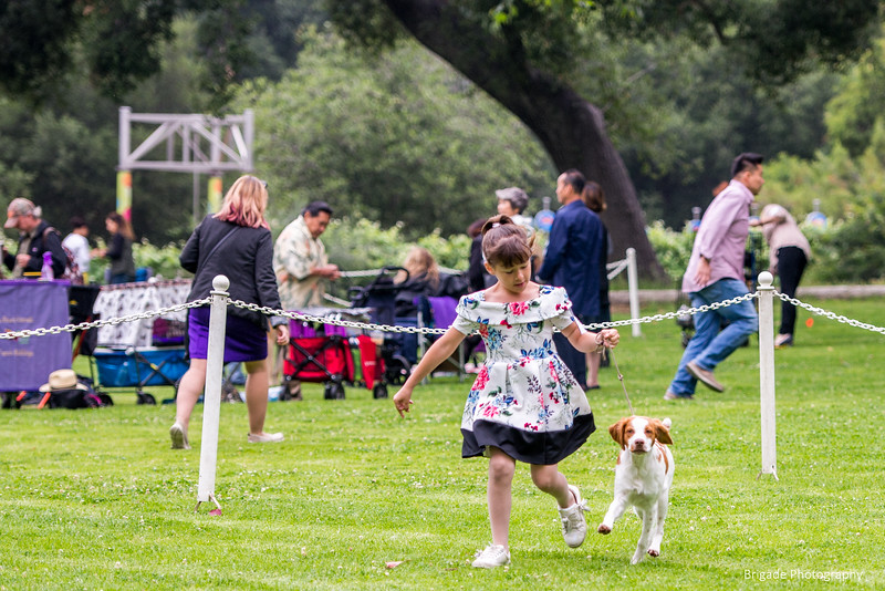 2019 Pasadena Kennel Club-7976.jpg