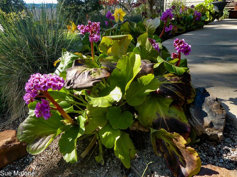 04-18-2021 Mid Spring Flowers-2.jpg