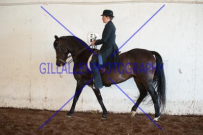 English Equitation Walk/Trot  110724